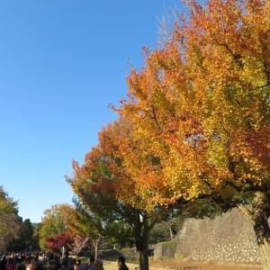 皇居乾通りで紅葉狩り、大嘗宮も見れました