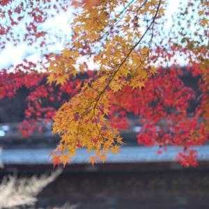 【1泊2日 秋の京都旅行 グルメ&大人旅】①南禅寺