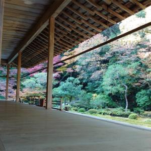 【1泊2日 秋の京都旅行 グルメ&大人旅】②南禅院