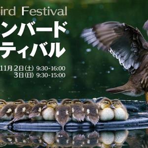ジャパンバードフェスティバルに出展します