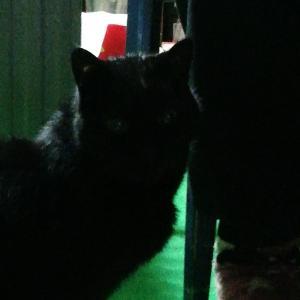 本日の黒猫マークン