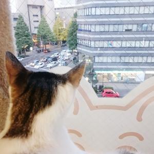 お外の世界から帰ってきた子猫に変化が・・