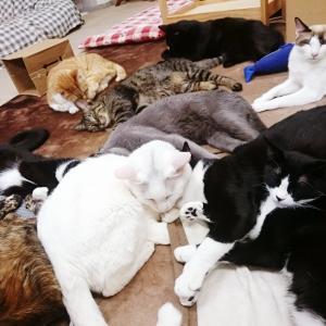 猫とお客さんのお悩み解決!NEW〇〇タイム始まるよー