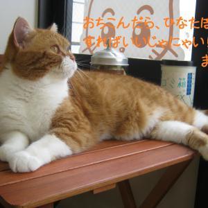 Q&A どんな人が猫カフェに集まるの?