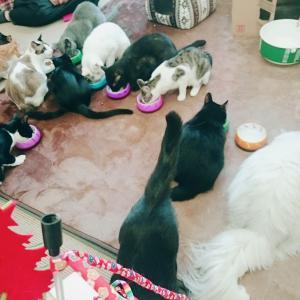 キミのワクワクをさらに盛り上げるにゃ!オンリーワンな猫達集合―☆