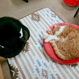 猫カフェあるある!猫たちのフミフミ大監修が始まる!?