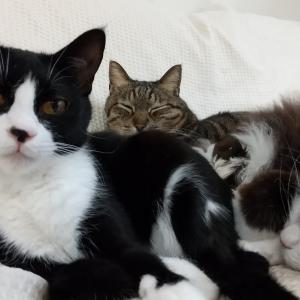 見てみて!猫達の一発芸なのにゃーー