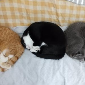 寝ている子猫のアソコを撫でると・・・すっごい伸びるよ!!