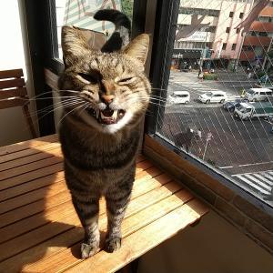 今週はジュリちゃんに会いに来て!あなたも始めよう猫ライフ