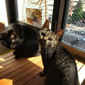 「猫と触れ合う」とはこういう事!ニャンズも待ってるにゃよ♡
