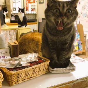寒ーい!!さぁみんな、猫の国へWELCOMEなのニャ――
