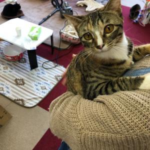 過ごし方色々!貴方だけの猫カフェスタイルを見つけよう