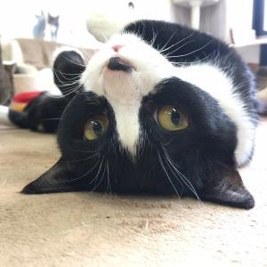 貴方が猫を好きになったきっかけはにゃに?