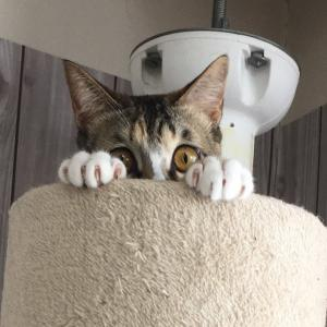 貴方の人生に【猫カフェ】という選択肢を✨