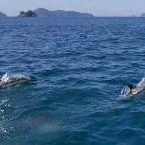 GWファミリークルージング(その2)イルカに出会う