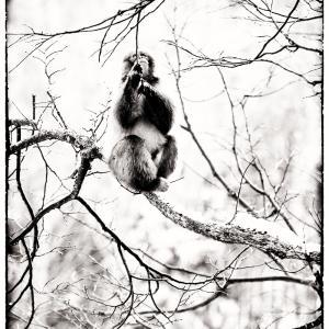 猿・サル・さる