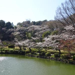 薬師池公園は春真っ盛り
