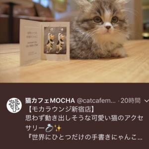 猫カフェ Mochaラウンジ 新宿店 出品中にゃ