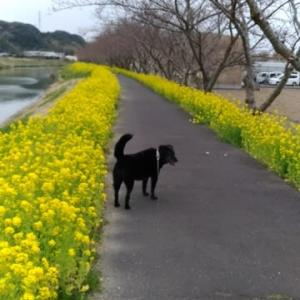 3/30 待ち遠しい桜