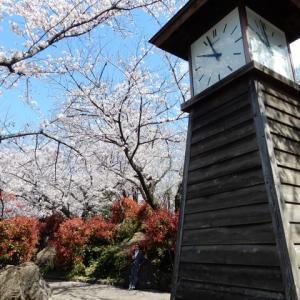 4/3 東京の桜 2