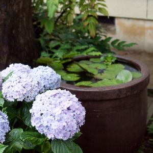 梅雨です。 ~ メダカ屋外飼育の大雨対策 ~