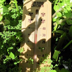 屋外飼育水槽の水温上昇対策(再々掲)
