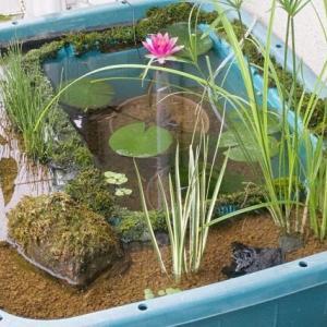 ジャンボタライビオトープで理想の飼育環境を考える!?