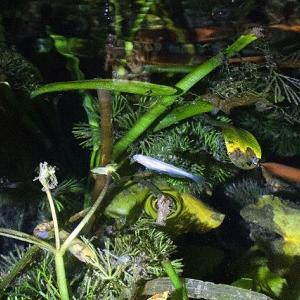 11月、メダカ池の昼と夜