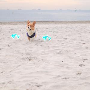 砂浜でモッテコイ。
