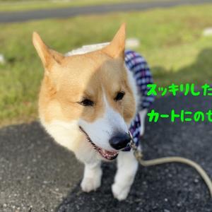 小太郎、本退院できました。