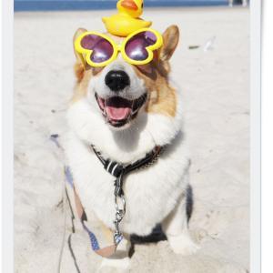 あさんぽは砂浜へ。