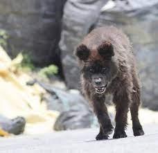 福島の山中で牙剥く謎の生物