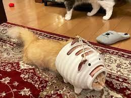 「蚊取りアーマー」な猫
