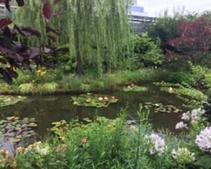 睡蓮の池のほとりで