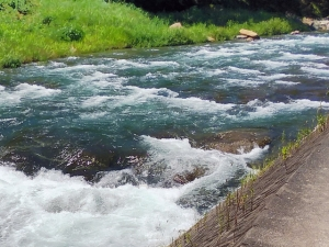 蒼き川と白き放流鮎
