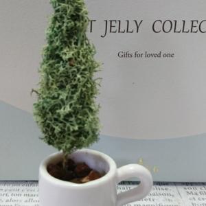 コーヒーカップのコニファー作りとアサリナの蕾