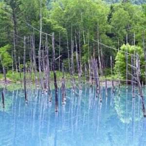 北海道旅行2019「美瑛 青い池」