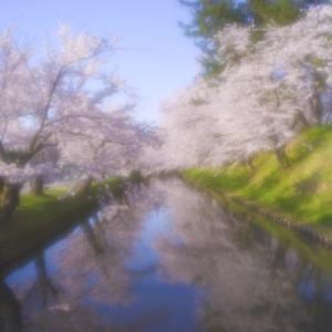 弘前公園の桜2021その2
