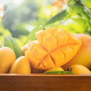 日本へ宅配マンゴー再開のお知らせ