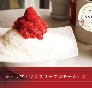 The Anthea, Flower on Cake プロモーション