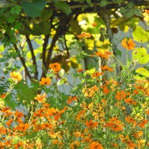 周りが秋らしくなってきました