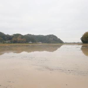 田んぼに水が入りました