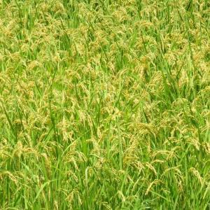 収穫の嬉しい予感