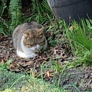 猫のドラミちゃんとミケちゃんが