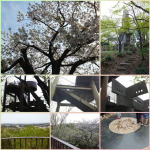 万朶の桜を見に衣笠山へ