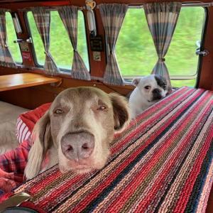 7月の三連休はカヌーとキャンプ