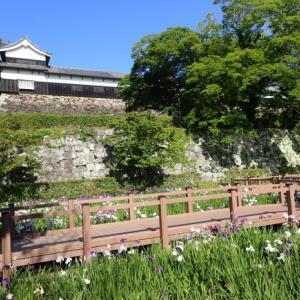 舞鶴公園の花しょうぶ園 (舞鶴公園 2021/05/29撮影)
