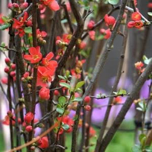 3月 庭の花