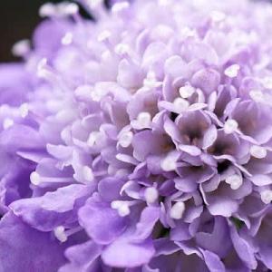 4月庭の花々