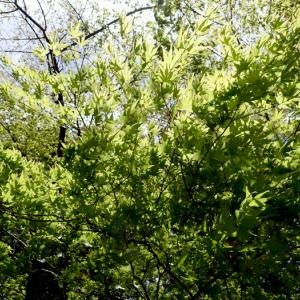 新緑の渓にて